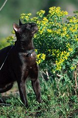 Dahni the blind cat rubs against the flowers near Gamla, Israel, photograph copyright Lorelle VanFossen