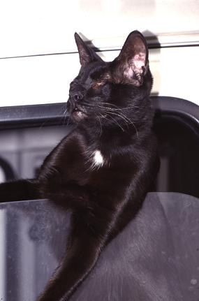 Dahni the traveling eyeless wonder cat, blind from birth, hanging out of the motor home window in Spain, photograph copyright Lorelle VanFossen