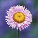 Avatar 80px Flower