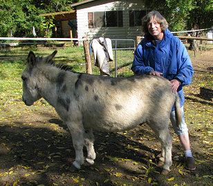 Miniature donkey Rocko with owner Leslie in Oregon, photograph copyright Lorelle VanFossen