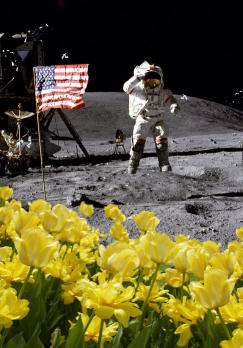 Hoax image of flowers on the moon copyright Lorelle VanFossen