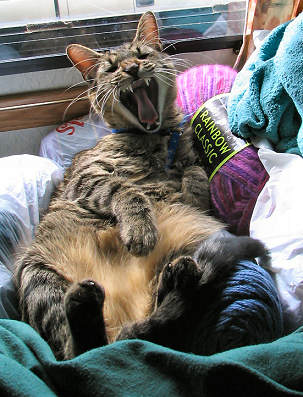 Holiday sleeps in and yawns in my knitting yarn, photograph copyright Lorelle VanFossen