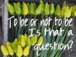 Photograph of tulips with words - to be or not to be. Is that a question?