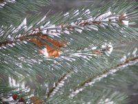 leafintreeneedles