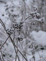 seedpodsinsnow
