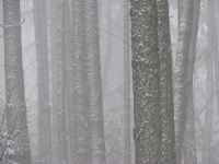 snowindensetrees