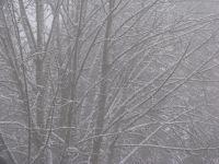 snowintrees2