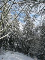snowintreesback