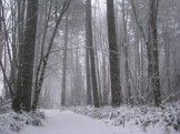 Snow in Forest Driveway. Photography by Brent VanFossen.