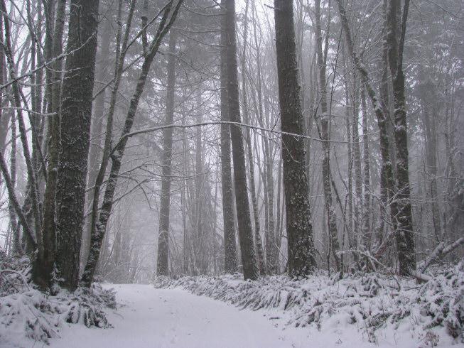 snowondrive1
