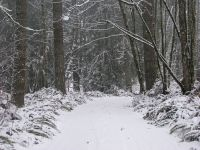 snowondrive3