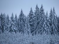 Trees in snow forest - photography by Brent VanFossen.