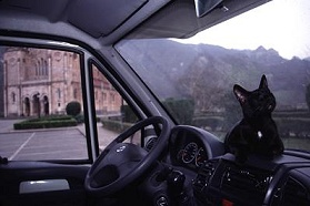 Dahni, our Israeli cat, on the dashboard of our RV in Covadunga, Spain - on the road