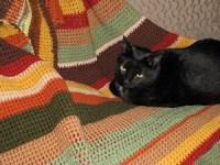 Our cat, Kohav, nestles on handmade afgan
