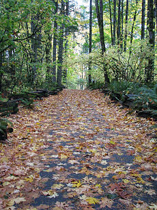 VanFossen driveway covered in leaves for fall.