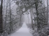 Snow on the road in forest. Photography by Brent VanFossen.