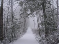 Snow on the road in forest.