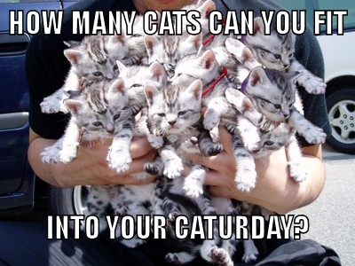Person holding many kittens in his arms with text how many cats can you fit into your caturday.